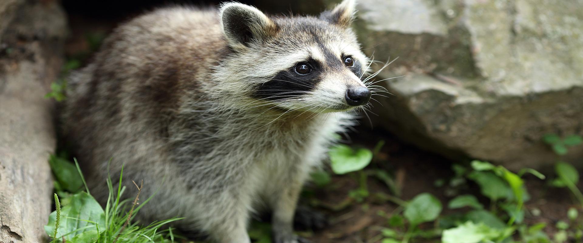 Pest Control Company, Exterminator, Wildlife Removal